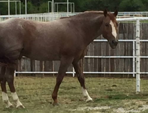 Reagan Lancaster announces Smoking Aces is offered for breeding at Lancaster Ranch